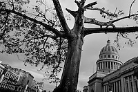 A wide branched tree seen during a cloudy stormy day in front of The Capitol (El Capitolio) in Havana, Cuba, 18 August 2008. El Capitolio is a neoclassical building modeled after the U.S. Capitol building in Washington and the Pantheon in Paris. Completed in 1929, it was home to Cuban legislature (Palace of Congress). Since the Cuban Revolution, The Capitol has become the seat of the Ministry of Science, Technology, and the Environment. The Capitol is one of Havana's most popular tourist attractions.
