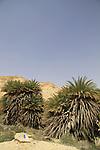 Israel, Negev, Israel Trail in Ein Shaviv