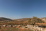 Samaria, Olive grove in front of Yanun