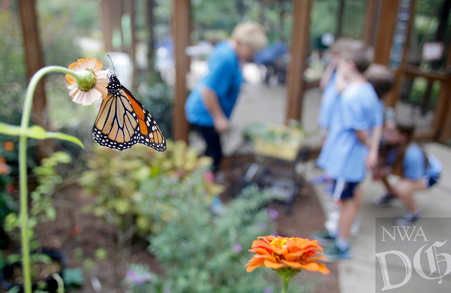 NWA Democrat-Gazette/DAVID GOTTSCHALK A monarch butterfly sits on a flower Thursday, October 4, 2018, as JoAnn McKim, a volunteer at the Botanical Garden of the Ozarks, speaks with third grade students from The New School during Butterfly Days 2018 at the garden in Fayetteville. First through third grade students participated in the four day event that corresponded with science and biology curriculum at the school and featured  seven education stations about butterflies.