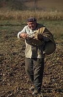 Europe/Hongrie/Tokay/Env Sarospatak: Paysan hongrois semant dans les champs