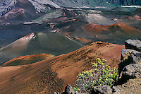 The natural landscape of the crater in HALEAKALA NATIONAL PARK on Maui in Hawai is dominated by its many cinder cones.i