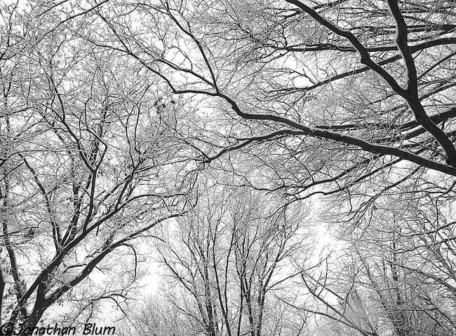 Riverside Park Trees in Winter
