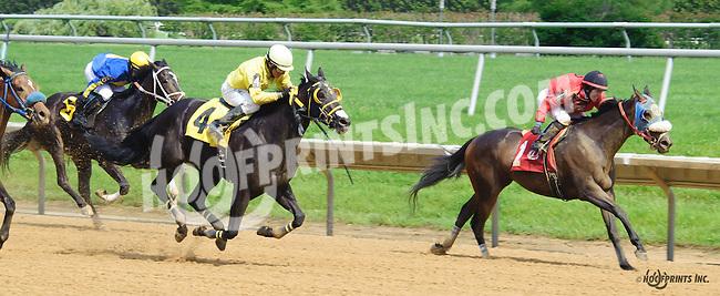 Allied Kid winning at Delaware Park on 6/6/16