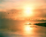 USA, Wyoming, geese flying over the Yellowstone River with sun reflecting on it at dawn, Yellowstone National Park