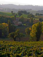 Italien, Umbrien, Landschaft bei Foligno - Weinanbau   Italy, Umbria, landscape near Foligno - wine growing