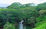 Serene scene by the Wailua River at Kauai's Hindu Monastery<br /> Kauai, Hawaii