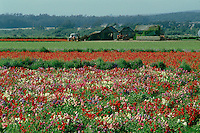 Flower fields<br />