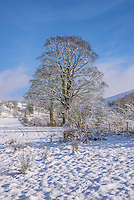 Snow and trees at Dinkling Green, Whitewell Lancashire.
