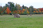 Hay harvest in autumn.  Round bales of hay.   Images of The Canadian Maritime Provinces of Nova Scotia and Prince Edward Island.