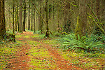 Washington, Southwestern, Battleground. A trail leads through evergreen forests on a rainy day.