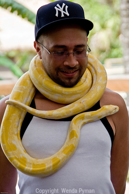 Up close and personal with a albino Burmese python,