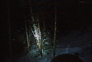 January 2016 - The light from a hiker's headlamp reflects off a reflective trail marker tack (above yellow trail blaze) along the Mt Tecumseh Trail in New Hampshire. The Tecumseh Trail, from the ski area parking lot to the summit, has been blazed with these reflective tacks. From what I understand, this is not proper trail blazing, and it is unknown why the Tecumseh Trail was blazed with them. These reflective tacks ruin the experience of night hiking.