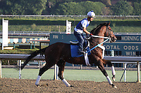 Tapizar trained by Steve Asmussen galloping at Santa Anita Park in Arcadia California