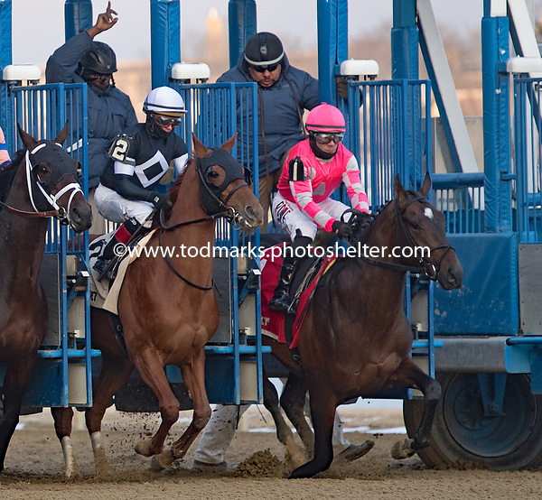 02/02/2019 - Withers Stakes at Aqueduct