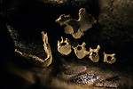 DOH; Who were the first Americans, Casts of bones & original tools, found in On Your Knees Cave in Alaska, Denver Museum, Colorado, 10500 year old human bone casts.