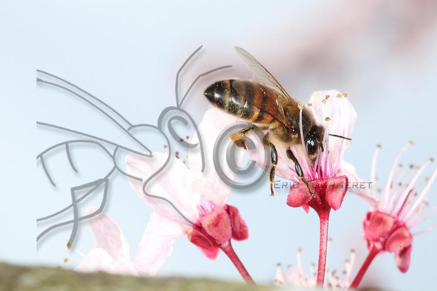 Bee on a pulm flower.