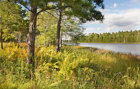 New Jersey - Pine Barrens Landscapes