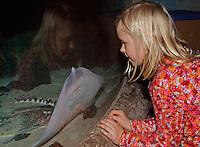 Mädchen, Kind beobachtet Rochen in einem Meeres-Aquarium, Aquarium, Raja clavata, Nagelrochen, Nagel-Rochen, Stachel-Rochen, Stachelrochen, Roker, Thornback ray, Raie bouclée