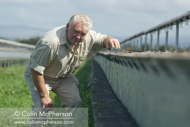 Ray Holden, owner of Hy-Fly Hatcheries, a company based in Preesall, near Blackpool, Lancashire which specialises in breeding partridge and pheasant to be sold to sporting estates, pictured checking raised cage laying units containing partridges. The partridges are kept in small cages for up to three years while they mature before being sold. Pheasants are also kept in cages but are transferred to outdoor pens as they mature. The company produces around three million day-old chicks per year.