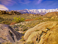 Spring growth in Alabama Hills, California