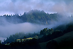 Forest, hill, and fog, Del Norte County, Northern California