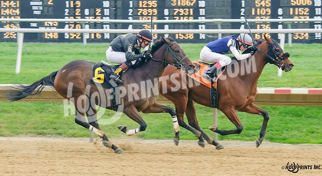 Traipse in Utopia winning at Delaware Park on 10/14/15