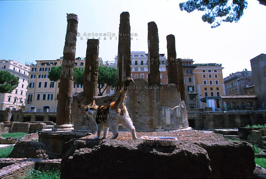 Un gatto a Largo Argentina. Roman cat at largo Argentina
