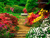 Tom Mackie, FLOWERS, photos, The Azalea Steps, Winkworth Arborentum, Surrey, England, GBTM200477-1,#F# Garten, jardín