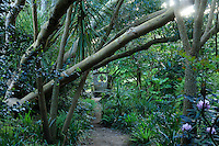 France, Manche (50), Vauville, Jardin botanique du château de Vauville, ambiance asiatique et tête de boudha