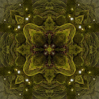 Kaleidoscopic photograph