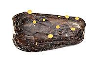 Hymenoscyphus fructigenus