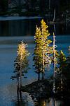 Pine trees growing next to alpine Suzie Lake, Desolation Wilderness, El Dorado National Forest, California