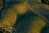 aerial of Sonoma Co. Wineyards, in CA..pregnant figure