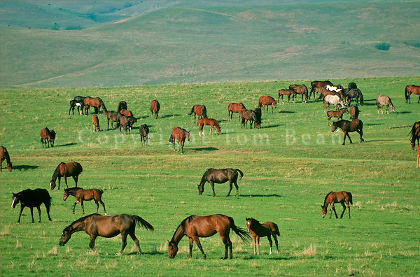 Horses graze on South Dakota prairie, Jones County, South Dakota, AGPix_0356.