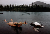 A tough Russian scientist throws a duck from icy waters on to shore when his dog refused to retrieve his hunting prize.