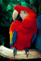 Close-up of Parrot at Paradise Park, Honolulu, Oahu, Hawaii