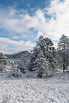 fresh snow at morning on Prospect Mountain, Estes Park, Colorado, USA