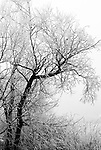 Winter Silence.  From the Palmer Divide Series.