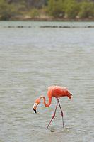 EC- Flamingo Sanctuary Taxi Max Curacao Tour during HAL Koningsdam S. Caribbean Cruise, Curacao 3 19