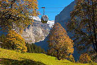 Alpine pastures with cable car- Swiss Alps, Grindelwald, Switzerland