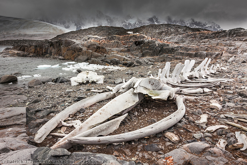 Rearticulated whale skeleton at Jugla Point, near Port Lockroy, western Antarctic Peninsula.