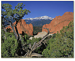 Pikes Peak framed by Juniper tree in Garden of the Gods State Park, Colorado Springs, Colorado, USA. John leads private photo tours throughout Colorado, year-round.