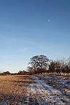Oak tree and moon landscape, The Big Freeze, January 2009, Sutton, Suffolk, England