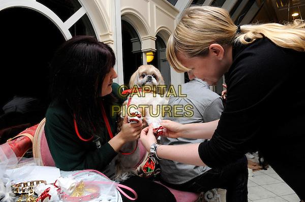 ATMOSPHERE .Harrods 7th Annual Pet-A-Porter Dogwalk Event, Harrods, Knightsbridge, London, England..November 26th, 2009.dog animal pet shoes booties dressing stylist half length.CAP/FIN.©Steve Finn/Capital Pictures.