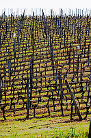 vineyard chateau pey la tour bordeaux france