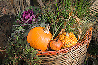 Italy, Alto Adige-Trentino (South Tyrol), village Montagna: basket with decorative gourds | Italien, Suedtirol (Alto Adige-Trentino), Montan: Korb mit Zierkuerbissen - Dekoration