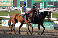 January 17, 2015:  Golden Soul (KY) with Brian J Hernandez Jr. in the Col. E.R. Bradley Handicap at the New Orleans Fairgrounds course. Steve Dalmado/ESW/CSM