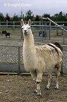 MA45-001z  Llama