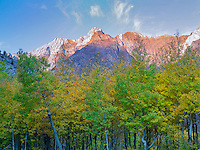Fall colored aspen trees and Eastern sierra Nevada Mountains near McGee Cree, California